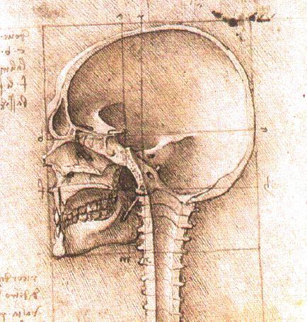 Leonardo da Vinci brain drawing